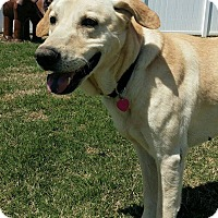 Adopt A Pet :: Rex - Huntsville, AL