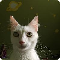 Adopt A Pet :: Popcorn - Chicago, IL
