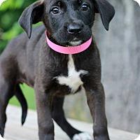 Adopt A Pet :: Anna - Waldorf, MD