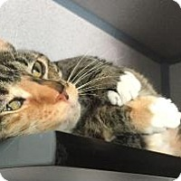 Adopt A Pet :: Hunter - Fort Collins, CO