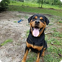Adopt A Pet :: Juice - New Smyrna Beach, FL