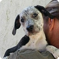 Adopt A Pet :: Jolene - Medora, IN