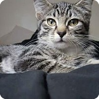Adopt A Pet :: Katarina - Fort Collins, CO