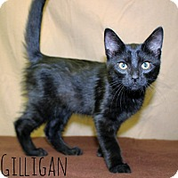 Adopt A Pet :: Gilligan - Melbourne, KY
