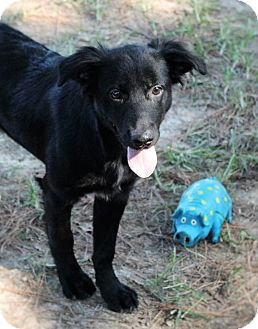 Labrador Retriever Mix Dog for adoption in Murphysboro, Illinois - Hubert