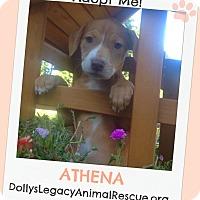 Adopt A Pet :: ATHENA - Lincoln, NE