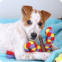 Adopt A Pet :: Reno - Sudbury, MA