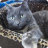 Adopt A Pet :: Crystal (affectionate) - Roseville, MN