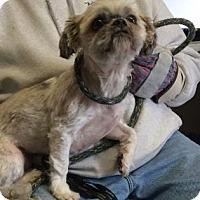 Adopt A Pet :: Ginger - Voorhees, NJ