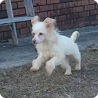 Adopt A Pet :: Romeo - Aiken, SC