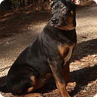 Adopt A Pet :: Ellie May - Burbank, OH