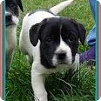Adopt A Pet :: Oreo - Staunton, VA