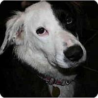 Adopt A Pet :: Mia - Pending - Vancouver, BC