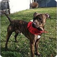 Adopt A Pet :: Kato - Clay, NY