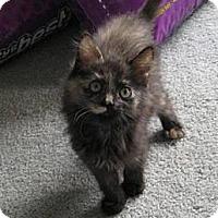 Adopt A Pet :: Beauty - Kirkwood, DE