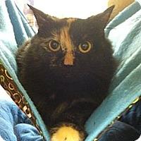 Adopt A Pet :: Topaz - Monroe, GA