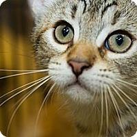 Adopt A Pet :: Kendall - Irvine, CA