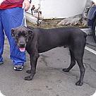 Adopt A Pet :: Maloof