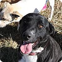 Adopt A Pet :: Jessie - Russellville, KY