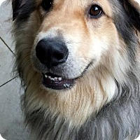 Adopt A Pet :: George - Fennville, MI