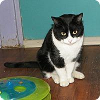 Adopt A Pet :: JuJu - Dover, OH
