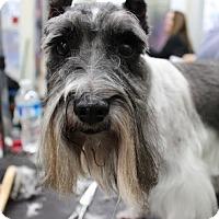 Adopt A Pet :: Dotty-News! - Laurel, MD