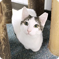 Adopt A Pet :: Lurch - Chicago, IL
