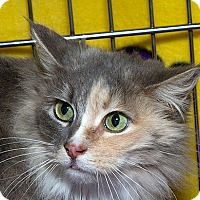 Adopt A Pet :: Ms Heather M - Sacramento, CA