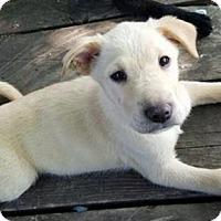 Adopt A Pet :: Blonde - Valparaiso, IN