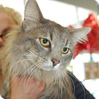 Adopt A Pet :: Brett - Great Mills, MD