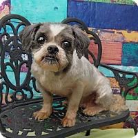 Adopt A Pet :: Capri Barkley - Urbana, OH
