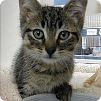 Adopt A Pet :: Raspberry - Topeka, KS