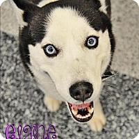 Adopt A Pet :: Elaine - Carrollton, TX