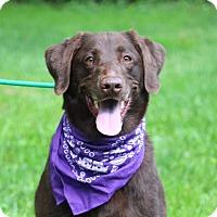 Adopt A Pet :: Toda - Brattleboro, VT