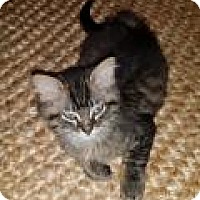 Adopt A Pet :: Owen - Pittsburgh, PA