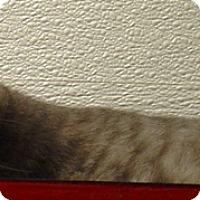 Adopt A Pet :: Trinity - Kalamazoo, MI