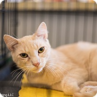 Adopt A Pet :: Morrie - Fort Wayne, IN