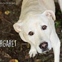 Adopt A Pet :: Maggie - Liberty, MO