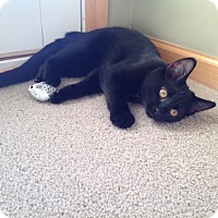 Adopt A Pet :: Toby - Bloomington, MN