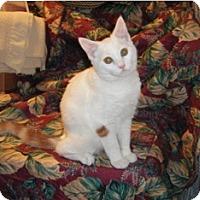 Adopt A Pet :: Henree - Colmar, PA
