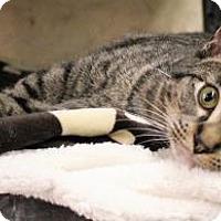 Adopt A Pet :: Nugget - West Des Moines, IA