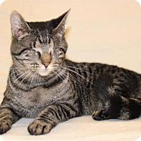 Adopt A Pet :: Radar (no eyes) - Modesto, CA