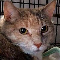 Adopt A Pet :: Orla - Trevose, PA