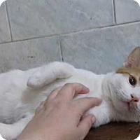 Adopt A Pet :: Roy - Marion, CT