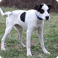 Adopt A Pet :: Victor - Waldorf, MD
