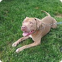 Adopt A Pet :: Bacchus - New orleans, LA