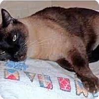 Adopt A Pet :: Sam - Alexandria, VA