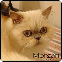 Adopt A Pet :: Morgan - Beverly Hills, CA
