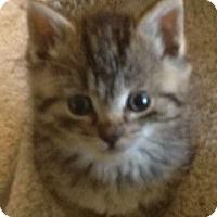 Adopt A Pet :: Sara - Island Park, NY