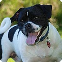 Adopt A Pet :: Frankie - PENDING - Toronto/Etobicoke/GTA, ON